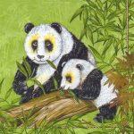 Szalvéta Panda