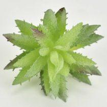 Pozsgás műnövény 7,5 cm x 9,5 cm