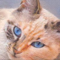 dekorszalvéta cica, macska, szalvéta macska, szalvéta cica, macskás szalvéta, cicás szalvéta