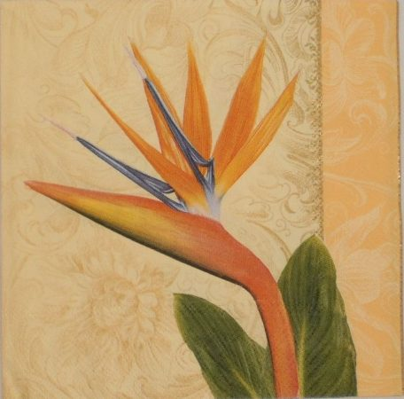 Dekorszalvéta - Virág Papagájvirág